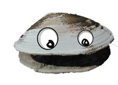 killer clam